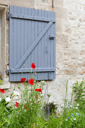 Poppies against stone façade with slate-grey window shutter