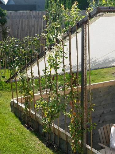Garden With Sunken Terrace Below Awning