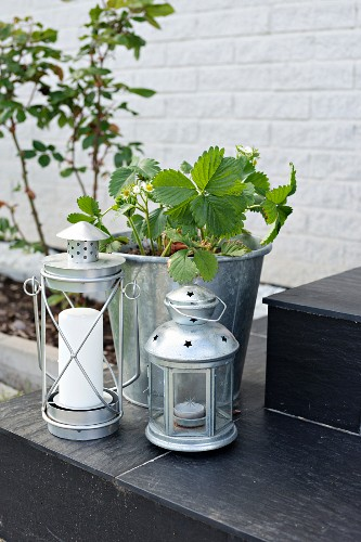 Various aluminium lanterns and strawberry plant in zinc bucket on steps outdoors