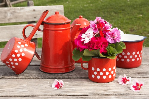Rustic arrangement of red enamel coffee pots, red and white polka-dot milk jugs and saucepan, and posy of geraniums