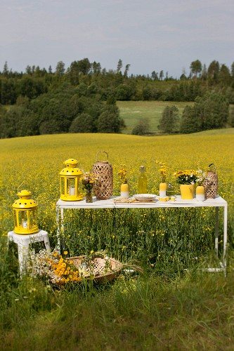 Set picnic table in field of flowering rapeseed