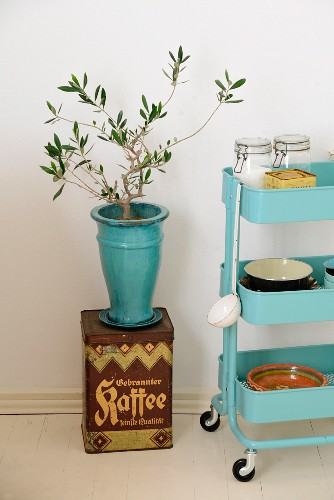 Small olive tree in turquoise ceramic vase stood on vintage coffee can next to crockery on serving trolley