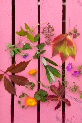 Various leaves and flowers on pink surface