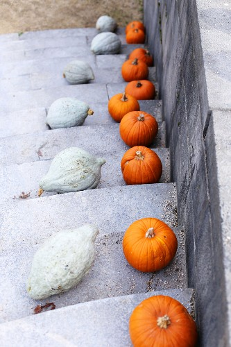 View down steps with white and orange pumpkins on treads