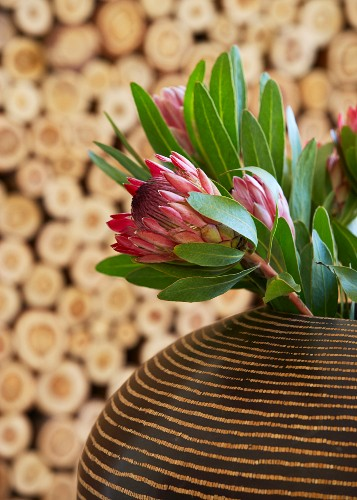 Brown striped, pot belly ethnic vase holding exotic protea flowers with firewood in background