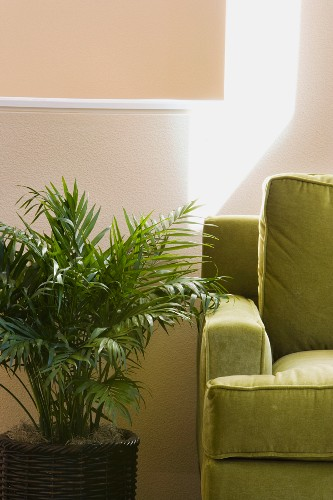 Green Arm Chair and Potted Plant