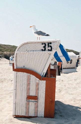 Seagull sitting on a roofed wicker beach chair