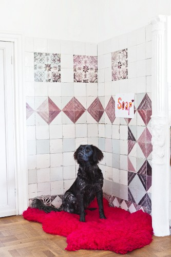 Black dog on hot-pink fur rug in front of traditional wall tiles in corner