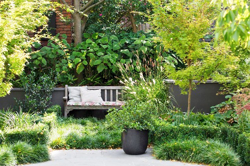 Lush green courtyard garden with bench and ground cover