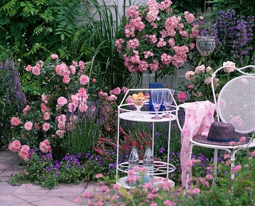 Roses 'Gertrude Jekyll', Stem Rose 'Ballerina'