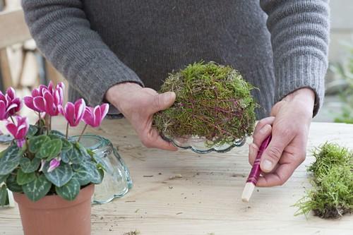 Make yourself a moss bowl