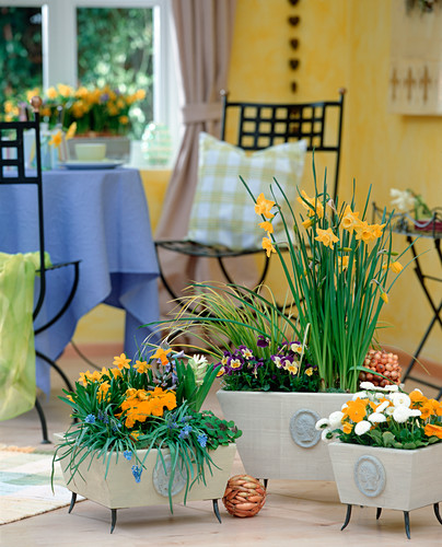 Spring flowers in the room