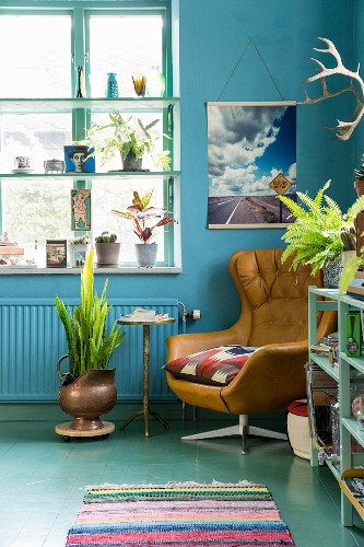 Leather armchair against blue wall and next to window with window shelves