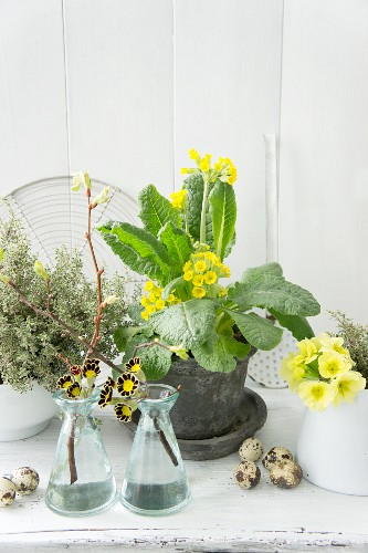 Spring arrangement of cowslips and quail eggs
