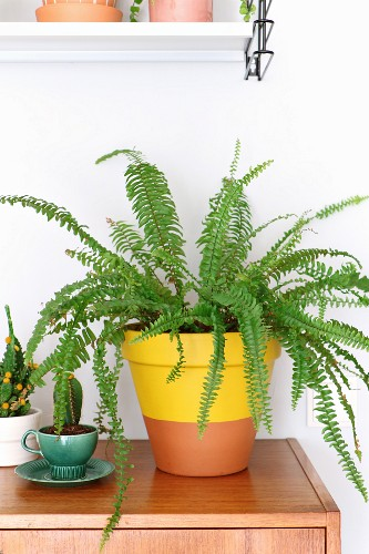 Fern in yellow dip-dye terracotta pot and cactus in green retro cup