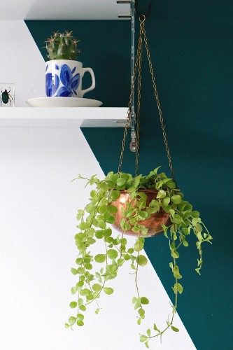 Houseplant in copper plant hanger suspended from white wall-mounted shelf