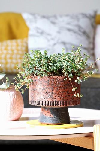 Houseplant in rustic 60s pot