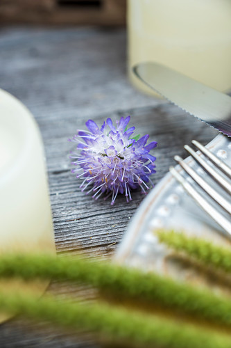 Field scabious flower on wooden table