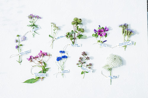 Various labelled wildflowers on white surface