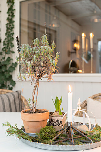 Wintry arrangement with lollipop lavender and candles