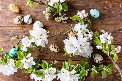 Decor colorful Easter quail eggs with spring blossom branch with cherry flowers over wooden background