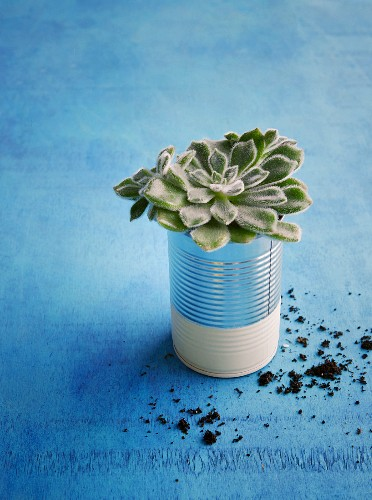 A painted tin can used as a flower pot