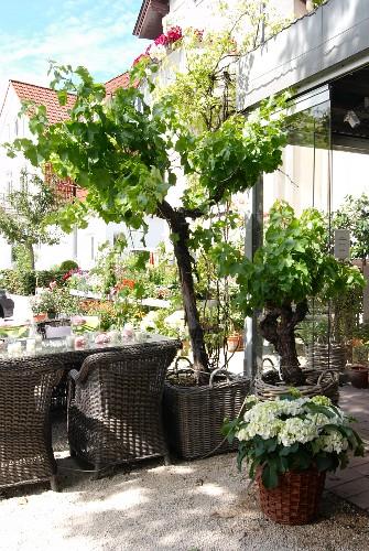 Sommerlicher Terrassenplatz mit Korbmöbeln