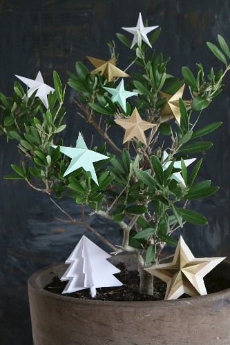 Origami stars and paper Christmas tree arranged on small olive tree