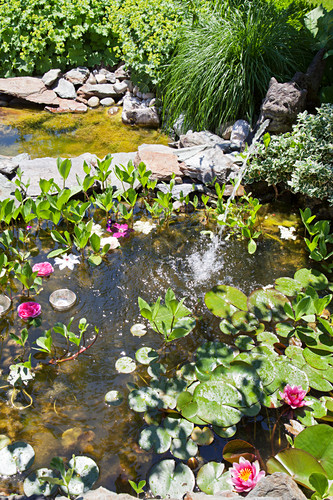 Water pouring from water spout into lily pond