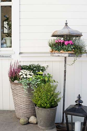 Various plants planted in basket, metal bucket and bird table