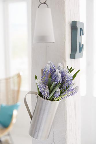 Purple and white grape hyacinths in metal jug