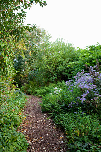 Shady herbaceous border in garden