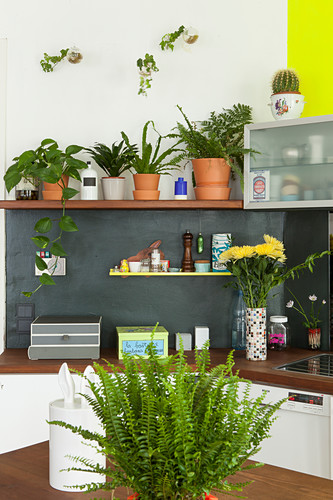 Houseplants on shelf above kitchen counter