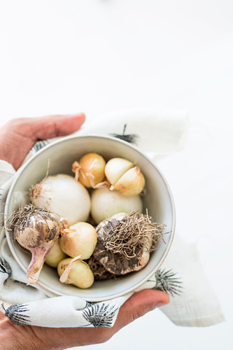 Hands holding bowl of onions and garlic in printed cloth