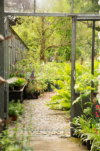 Paved path leading from nursery into garden
