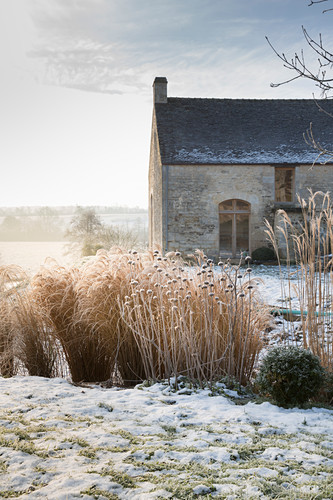 Seed heads of miscanthus and phlomis outside country house