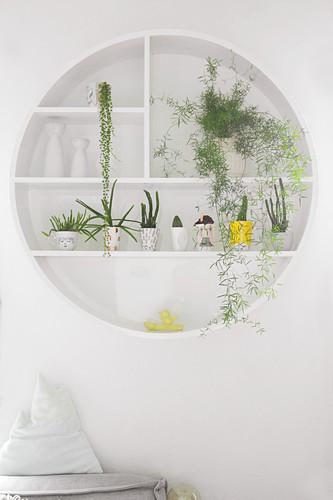 Houseplants on round wall-mounted shelves