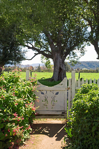 Original garden gate in front of a large tree