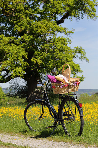 Bicycle with picnic basket on farm track in meadow of yellow flowers
