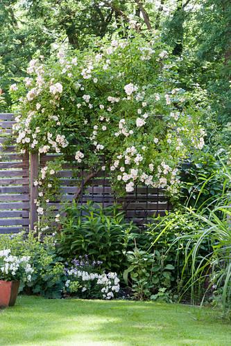 Climbing rose and flowerbed in idyllic summer garden