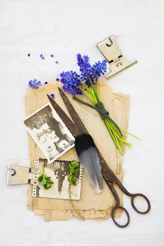 Still-life arrangement of vintage scissors, vintage family photos and grape hyacinths on stack of old papers