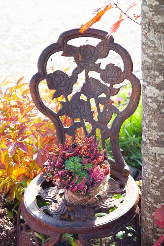 Posy of rose hips, blackberries and heather in pot wrapped in rough hessian on ornate chair in garden