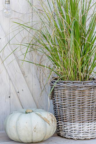 Weißer Zierkürbis neben bepflanztem Weidenkorb mit Ziergras