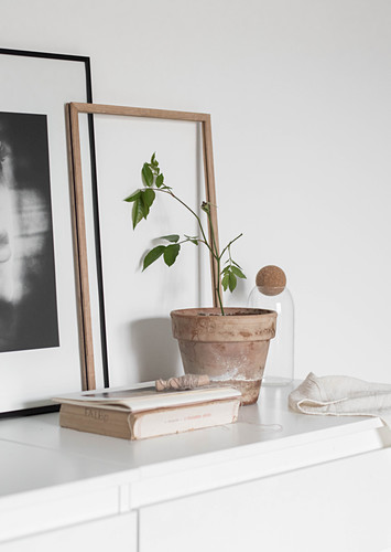 Potted plant, book, picture frame and photograph on white chest of drawers