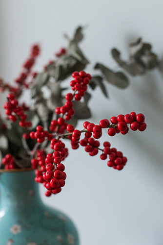 Sprigs of red holly berries and eucalyptus in blue vase