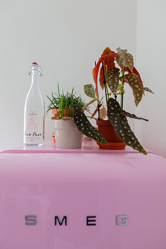 Houseplants and swing-top bottle on top of pink fridge