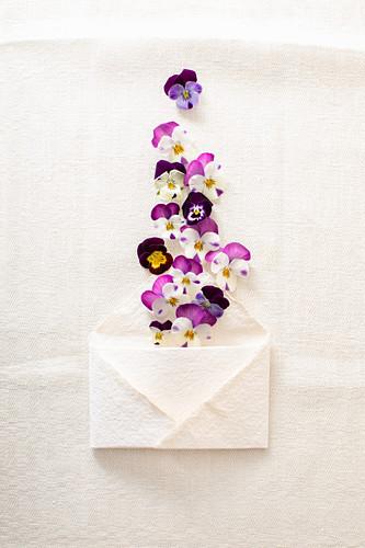 Viola flowers and envelope