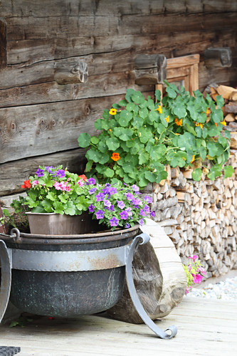 Sommerblumen vor Holzwand einer Almhütte (Tirol, Österreich)