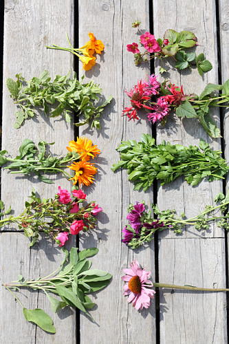 Various herbs and flowers