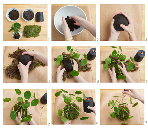 Kokedama (bepflanzte Moosbälle) selber machen